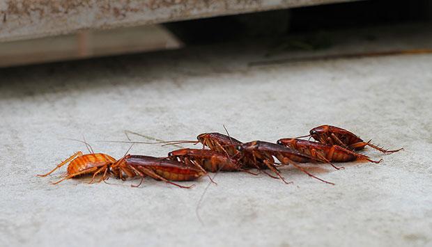 Schädlingsmonitoring und die Maßnahmen bei Kriechinsekten